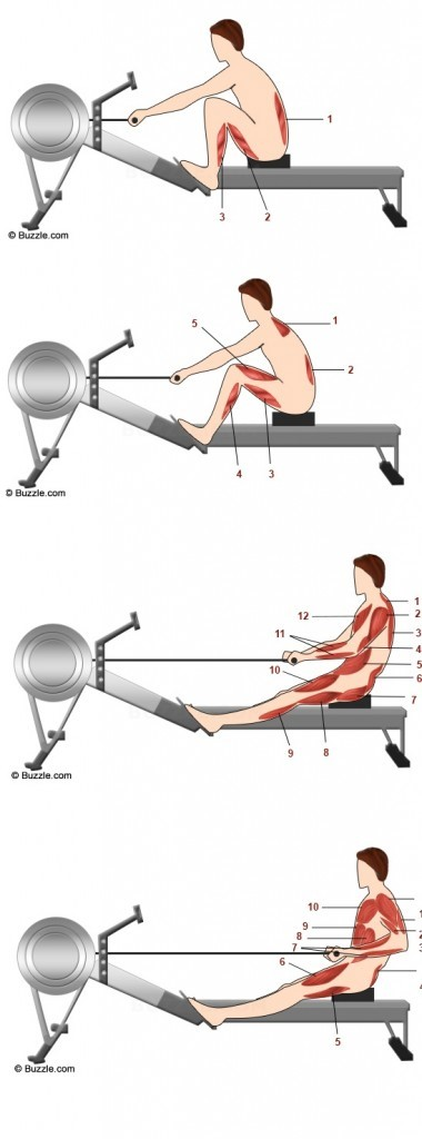 rowing machine workout muscles
